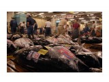 рыбный рынок / тунец Фотограф: marka  Просмотров: 747 Комментариев: 0