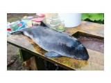 Дельфинёнок Запутался в сетях  Просмотров: 2611 Комментариев: 4