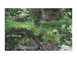 Владивосток. Ботанический сад Фотограф: vikirin  Просмотров: 432 Комментариев: 0