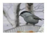 Название: P1180204 Фотоальбом: Птицы на моем окне Категория: Природа  Время съемки/редактирования: 2011:01:18 12:06:54 Фотокамера: OLYMPUS IMAGING CORP.   - FE250/X800              Диафрагма: f/4.7 Выдержка: 10/5000 Фокусное расстояние: 222/10 Светочуствительность: 64   Просмотров: 248 Комментариев: 0