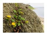 «Каменный цветок» :)