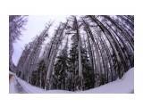 """Зимний лес Фотограф: gadzila """"Горный воздух""""  Просмотров: 1499 Комментариев: 0"""