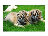 Название: IMG_7782 Фотоальбом: сафари-парк львов(крым) Категория: Животные  Просмотров: 1240 Комментариев: 0
