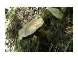 Одинокий гриб Фотограф: tasya  Просмотров: 362 Комментариев: 0