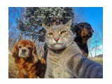 Название: 1527665437_49 Фотоальбом: Разное Категория: Животные  Просмотров: 2129 Комментариев: 0