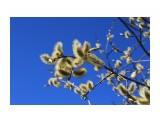 В самом расцвете... Фотограф: vikirin  Просмотров: 1763 Комментариев: 0