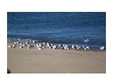 Чайки на перекуре.. Фотограф: vikirin  Просмотров: 2486 Комментариев: 0