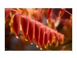 Название: DSC07397 Фотоальбом: Осень Категория: Природа Фотограф: VictorV  Время съемки/редактирования: 2020:10:28 22:43:08 Фотокамера: SONY - SLT-A99 Диафрагма: f/3.2 Выдержка: 1/3200 Фокусное расстояние: 900/10    Просмотров: 106 Комментариев: 0