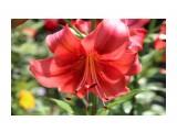 Название: IMG_4230 Фотоальбом: Цветы Категория: Цветы  Просмотров: 118 Комментариев: 0