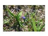 Синенькая крохотка на горе Фотограф: vikirin  Просмотров: 2446 Комментариев: 0