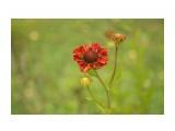 DSC08280 Фотограф: NIK  Просмотров: 328 Комментариев: 0