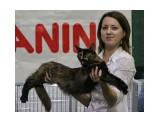 Название: Выставка Фотоальбом: выставка кошек Категория: Животные  Время съемки/редактирования: 2015:10:17 19:03:54 Фотокамера: Canon - Canon EOS 550D Диафрагма: f/5.6 Выдержка: 1/125 Фокусное расстояние: 92/1    Просмотров: 298 Комментариев: 0