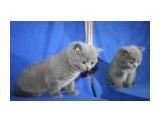 Название: кошка 1 Фотоальбом: котята Категория: Животные  Время съемки/редактирования: 2012:04:15 15:32:30 Фотокамера: Canon - Canon EOS 1000D Диафрагма: f/4.0 Выдержка: 1/60 Фокусное расстояние: 25/1    Просмотров: 375 Комментариев: 0