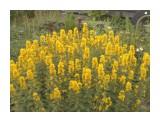 Название: 100_0612 Фотоальбом: мамины  цветочки Категория: Цветы  Время съемки/редактирования: 2012:07:22 18:51:35 Фотокамера: EASTMAN KODAK COMPANY - KODAK EASYSHARE Camera, M532 Диафрагма: f/6.0 Выдержка: 1/60 Фокусное расстояние: 139/10    Просмотров: 468 Комментариев: 0