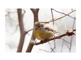 Название: Клёст-еловик, самка Фотоальбом: Птички Категория: Животные Фотограф: VictorV  Время съемки/редактирования: 2021:04:26 21:40:03 Фотокамера: SONY - ILCA-77M2 Диафрагма: f/6.3 Выдержка: 1/200 Фокусное расстояние: 6000/10    Просмотров: 141 Комментариев: 0