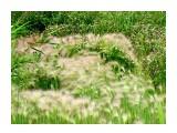 Название: Цветы и травы... Фотоальбом: Цветы Категория: Цветы  Время съемки/редактирования: 2016:07:27 20:44:23 Фотокамера: SONY - DSC-HX300 Диафрагма: f/4.5 Выдержка: 1/200 Фокусное расстояние: 3338/100    Просмотров: 65 Комментариев: 0