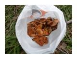 Подарок Камуя! Фотограф: viktorb Весенние грибы в Уюновской долине, в окр. Южно-Сахалинска!  Просмотров: 1299 Комментариев: 2