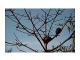 Домики на деревьях Шарики среди ветвей, которые я сначала принял за осиные гнезда, оказались муравейниками! Даже эта мелочь на Голгофе тянется к небу!  Просмотров: 1118 Комментариев:
