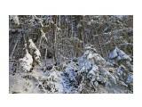 Название: первый снег Фотоальбом: на горном воздухе Категория: Природа  Время съемки/редактирования: 2015:11:08 13:34:50 Фотокамера: Canon - Canon EOS 6D Диафрагма: f/5.6 Выдержка: 1/640 Фокусное расстояние: 24/1    Просмотров: 871 Комментариев: 0