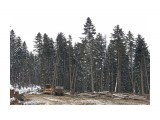 Название: заготовка леса Фотоальбом: в верховьях найбы Категория: Сюжет  Время съемки/редактирования: 2015:03:04 19:33:03 Фотокамера: Canon - Canon EOS 6D Диафрагма: f/5.6 Выдержка: 1/200 Фокусное расстояние: 50/1    Просмотров: 2237 Комментариев: 0