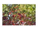 Название: DSC00476 Фотоальбом: Осень Категория: Природа Фотограф: VictorV  Время съемки/редактирования: 2019:09:30 21:57:44 Фотокамера: SONY - SLT-A99 Диафрагма: f/6.3 Выдержка: 1/400 Фокусное расстояние: 1600/10    Просмотров: 173 Комментариев: 0