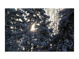 Зимний лес.. декабрь... Фотограф: vikirin  Просмотров: 1872 Комментариев: 0
