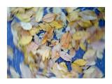 Осенний торнадо Фотограф: Королёв Игорь  Просмотров: 2294 Комментариев: 0