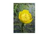 Десна мелеет и цветет! Фотограф: viktorb  Просмотров: 962 Комментариев: 0