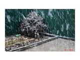 Снова снег, а Вани нет... Фотограф: gadzila  Просмотров: 503 Комментариев: 0