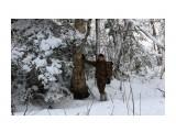 В лесу берендеевском... Фотограф: vikirin  Просмотров: 1734 Комментариев: 0