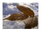 * / marka 2005 Фотограф: marka  Просмотров: 515 Комментариев: 0