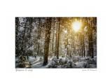 Утром в лесу Фотограф: В.Дейкин  Просмотров: 290 Комментариев: 0
