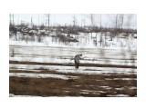 Север Сахалина. Цапля на полях Фотограф: vikirin  Просмотров: 1047 Комментариев: 0
