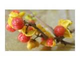 Название: Что это за ягоды? Фотоальбом: Грибы 2013г Категория: Природа  Время съемки/редактирования: 2013:11:06 16:36:32 Фотокамера: OLYMPUS IMAGING CORP.   - SP570UZ                 Диафрагма: f/3.5 Выдержка: 10/30 Фокусное расстояние: 977/100    Просмотров: 537 Комментариев: 5