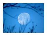 Название: DSC08399_н Фотоальбом: Разное Категория: Природа  Время съемки/редактирования: 2016:11:17 09:53:28 Фотокамера: SONY - DSC-HX300 Диафрагма: f/6.3 Выдержка: 1/320 Фокусное расстояние: 21500/100    Просмотров: 70 Комментариев: 2