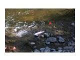 Название: Борется !! Чуть леску не порвала Фотоальбом: 2013 09 12 Заехали на речку!! И ну рыбачить!!! Категория: Рыбалка, охота Фотограф: vikirin  Время съемки/редактирования: 2013:09:23 23:22:14 Фотокамера: Canon - Canon EOS Kiss X3 Диафрагма: f/4.0 Выдержка: 1/500 Фокусное расстояние: 55/1    Просмотров: 1574 Комментариев: 0