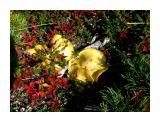 По всей тундре лимонного цвета грибы Фотограф: vikirin  Просмотров: 3907 Комментариев: 0