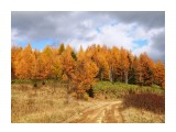 Природа 2018г  Краски осени   Просмотров: 263  Комментариев: 0