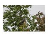 Название: кукушка Фотоальбом: Айруп, купола, мыс Свободный Категория: Природа Фотограф: Tsygankov Yuriy  Фотокамера: Canon - Canon EOS 60D Диафрагма: f/6.3 Выдержка: 1/800 Фокусное расстояние: 500/1    Просмотров: 129 Комментариев: 0