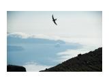 вид с влк Атсонупури на залив Львиная пасть и камень Лев Фотограф: ©  marka /печать больших фотографий,создание слайд-шоу на DVD/  Просмотров: 938 Комментариев: 0