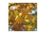 Название: BA7AC7BD-4B17-43E1-8975-942687C7BAF5 Фотоальбом: Осень Категория: Природа  Просмотров: 32 Комментариев: 0