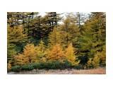 Тундра в дождь.. мокрые деревья как костерки... Фотограф: vikirin  Просмотров: 1597 Комментариев: 0