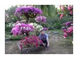Райский сад  Просмотров: 1372 Комментариев: