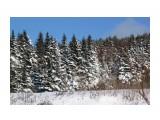 А лес стоит заснеженный... Фотограф: vikirin  Просмотров: 1612 Комментариев: 0