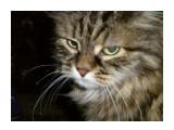 Название: P7170379 Фотоальбом: Мой питомец Категория: Животные  Время съемки/редактирования: 2008:07:17 19:49:08 Фотокамера: OLYMPUS IMAGING CORP.   - FE250/X800              Диафрагма: f/9.6 Выдержка: 10/2000 Фокусное расстояние: 120/10 Светочуствительность: 800   Просмотров: 280 Комментариев: 0