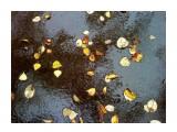 В дождь...  Просмотров: 1857 Комментариев: