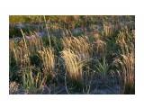 Тундровые травки.. Фотограф: vikirin  Просмотров: 2518 Комментариев: 0