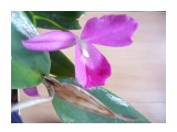 красотка интересная расцветка  Просмотров: 6 Комментариев:
