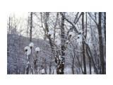 Название: _DSC0072 Фотоальбом: Зима... Категория: Пейзаж Фотограф: VictorV  Время съемки/редактирования: 2018:12:12 22:37:01 Фотокамера: SONY - DSLR-A900 Диафрагма: f/5.0 Выдержка: 1/2000 Фокусное расстояние: 450/10    Просмотров: 254 Комментариев: 0