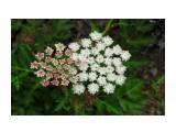 Наскальные растения. космические какие.. Фотограф: vikirin  Просмотров: 1649 Комментариев: 0